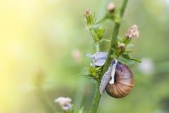 在花的蜗牛 库存照片