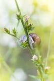 在花的蜗牛 免版税库存图片