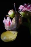 在花的蜗牛 库存图片