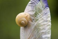 在花的蜗牛 免版税库存照片