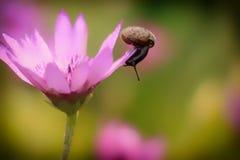 在花的蜗牛 免版税图库摄影