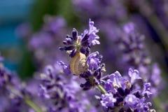 在花的蜗牛 图库摄影