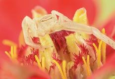 在花的蜘蛛 免版税库存照片