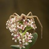 在花的蜘蛛 免版税库存图片