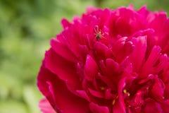 在花的蜘蛛 库存照片