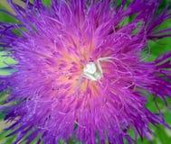 在花的蜘蛛 免版税图库摄影