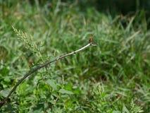 在花的蜻蜓 图库摄影