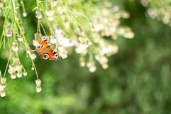 在花的蝴蝶 花圃在庭院里 免版税库存图片