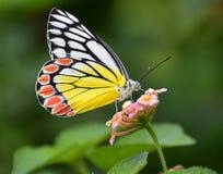 在花的蝴蝶 免版税库存图片