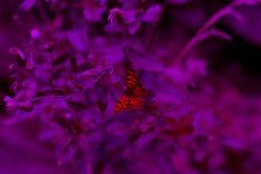 在花的野生浪漫蝴蝶 免版税库存图片
