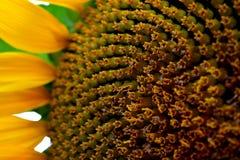 在花的阳光 库存照片