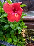 在花的雨 库存图片