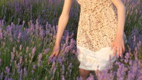 在花的领域的好的小白种人女孩金发碧眼的女人步行自然 概念秀丽健康 股票录像