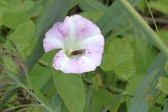 在花的飞行 库存照片