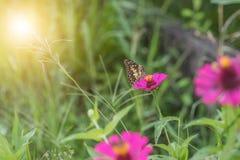 在花的蝴蝶在热带庭院里 免版税库存照片