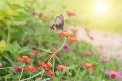在花的蝴蝶在热带庭院里 免版税图库摄影