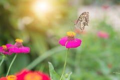 在花的蝴蝶在热带庭院里 图库摄影