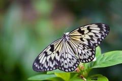 在花的蝴蝶在黑背景 库存照片