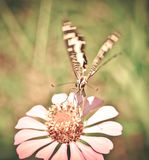 在花的蝴蝶飞行 免版税库存照片