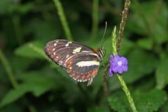 在花的蝴蝶 库存照片