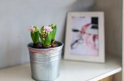 在花盆和照片的花 家庭装饰 免版税库存照片