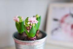 在花盆和照片的花 库存照片