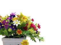 在花盆和白色背景的五颜六色的花 免版税图库摄影