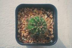 在花盆的一个小的仙人掌 库存图片