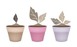 在花盆的三棵抽象布朗树 免版税图库摄影