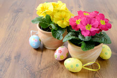 在花盆的两朵报春花与复活节彩蛋装饰 免版税库存照片