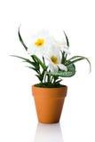 在花盆的人为雏菊 免版税库存照片