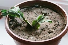 在花盆的干燥地球 库存图片