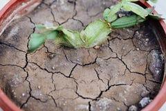 在花盆的干燥地球 免版税库存照片