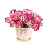 在花盆的玫瑰 免版税库存照片