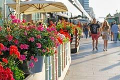 在花盆的红色和桃红色大竺葵在街道咖啡馆大阳台在莫斯科 库存图片