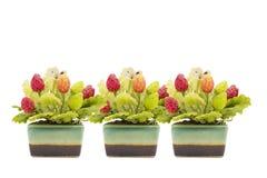 在花盆的红色和绿色草莓植物 免版税库存图片