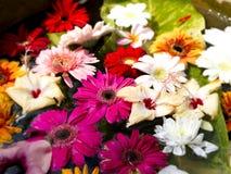 在花盆的美丽的色的花 免版税库存图片