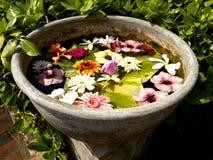 在花盆的美丽的色的花 免版税库存照片