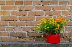 在花盆的花在砖墙背景 免版税库存图片