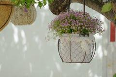 在花盆的仙人掌 免版税库存图片