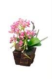 在花盆的Artificail兰花 免版税图库摄影