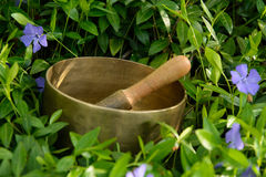 在花矢车菊中的唱歌碗 库存照片