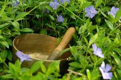 在花矢车菊中的唱歌碗 免版税库存照片