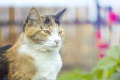 在花背景的猫与bokeh作用的,在日落 免版税图库摄影