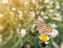 在花草和阳光的美丽的蝴蝶在白天期间 模糊的照片自然本底 免版税库存照片