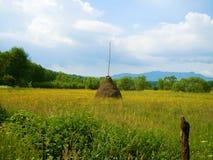 在花草甸中间的干草堆 库存照片