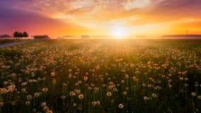 在花草甸的日出 库存照片