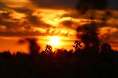 在花草甸的日落 库存图片