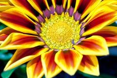 在花里面的蚂蚁,俄勒冈,美国 免版税库存照片