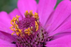 在花里面 库存照片